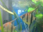 Présentations et Discussions sur vos fish-rooms 1099-46