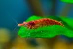 Présentations et Discussions sur vos fish-rooms 1215-3