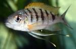 Présentations et Discussions sur vos fish-rooms 132-53
