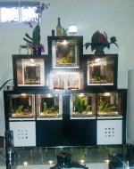 Présentations et Discussions sur vos fish-rooms 1515-16