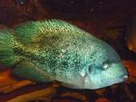 Présentations et Discussions sur vos fish-rooms 1870-63