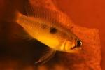 Présentations et Discussions sur vos fish-rooms 26-89