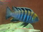 Présentations et Discussions sur vos fish-rooms 379-72