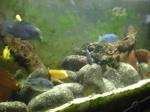 Discussions sur vos poissons 510-95