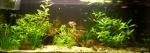 Présentations et Discussions sur vos fish-rooms 807-60