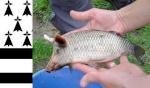 Présentations et Discussions sur vos fish-rooms 854-88