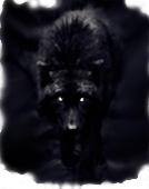 Noirlupus