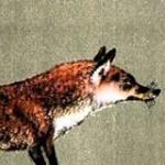 foxandfable