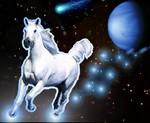 Beatiful Horses