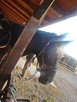 maja_horses