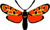 entomojp
