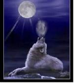 Loup du rivage