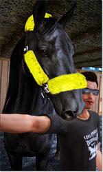 Equestrian Sims 113-57