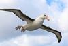 albatros24