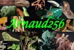 arnaud256