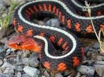 serpentaux