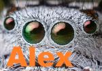 arachnalex