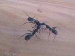 InsectesMan