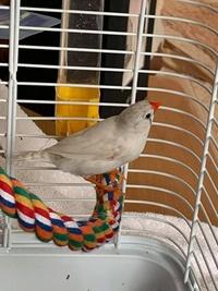 Oiseaux du Québec 6016-68