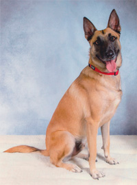 Georgeslemalinois