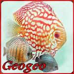 Geogeo