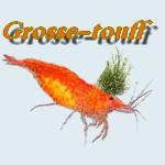 Grosse-touff