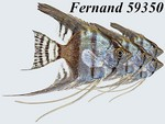 Fernand 59350