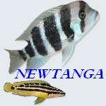 NEWTANGA
