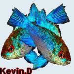Kevin.D