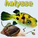 Halysse