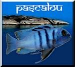 Pascalou