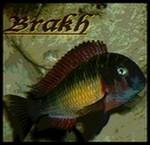 brakh