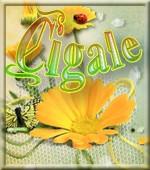 cigale4