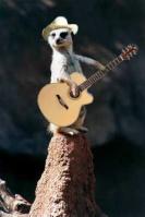 El suricate