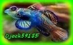 Djack59185