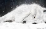 ptitwolfy