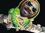 Snoopfrog