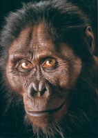 homininé
