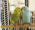 CocoCooky