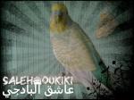 saleh_oukiki