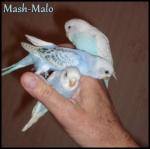 Mash-Malo