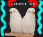 sami28