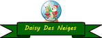 Daisy des neiges