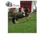 Gitan