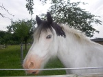 valerie cheval levant
