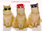 Cats-R-Us