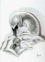 Artic Swan