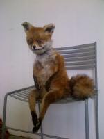 Bольный лис