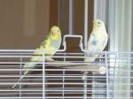 Recherche oiseaux, vente Matériels 178-47