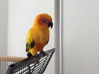 Recherche oiseaux, vente Matériels 351-75
